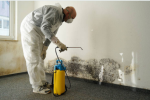a man removing wall mold
